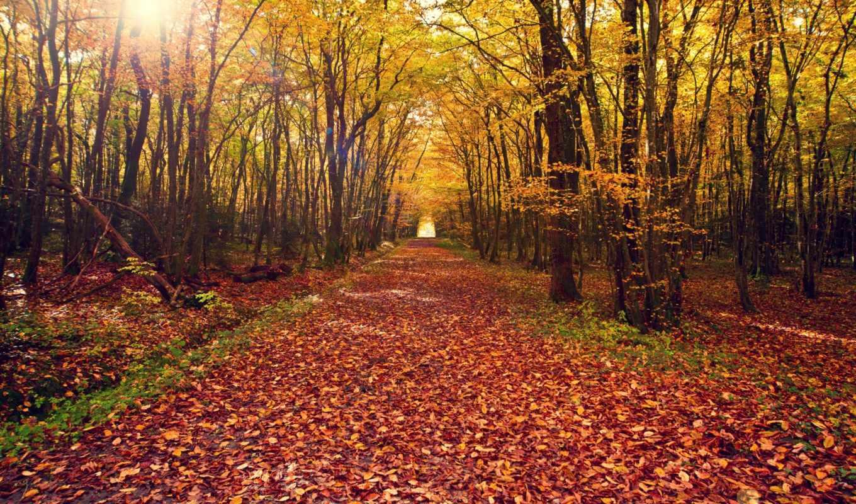 осень, природа, пейзаж, листья, дерево, деревья, лес,