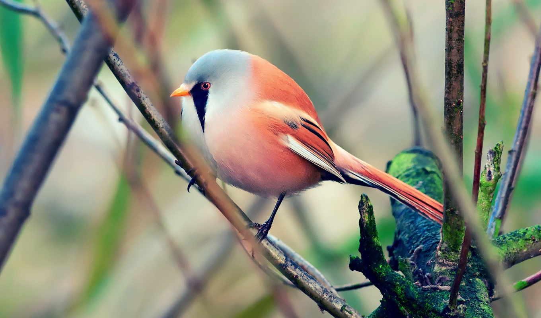 природа, качестве, нояб, базе, красивая, птица, весна, высоком,