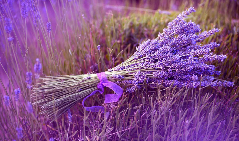 цветы, lavender, букет, поле, природа, картинка, tape,