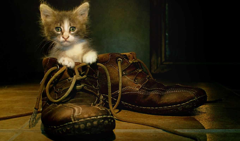котята, zhivotnye, киски, кошки, категория, красивые, заставки,
