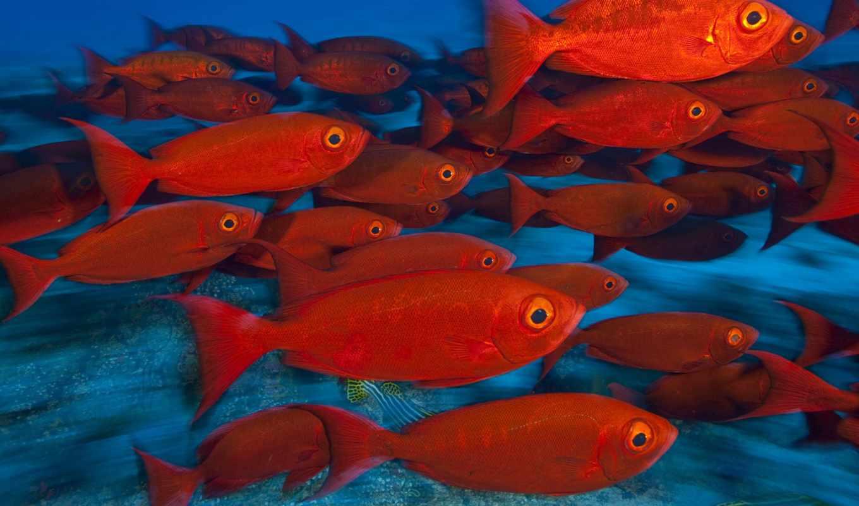 косяк, pisces, рыб, fish, море, шкала,