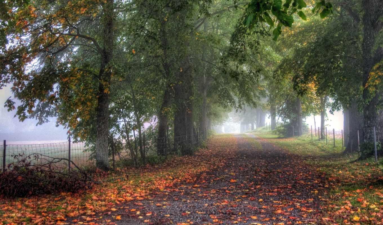 аллея, деревья, дорога, туман, ограда,
