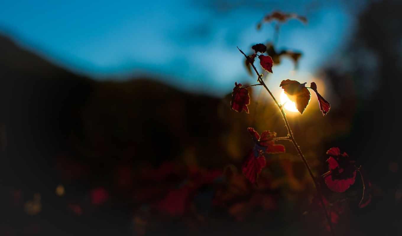 природа, full, макро, растения, sun, вечер, растение,