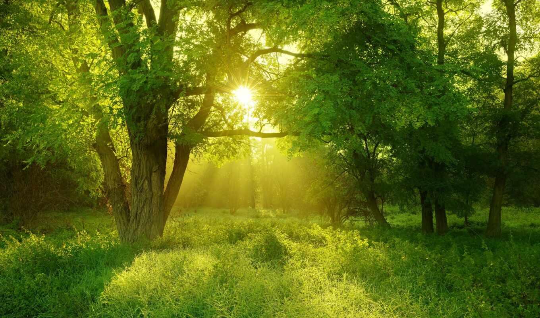 landscape, лес, красивый, oir, солнечный, природа