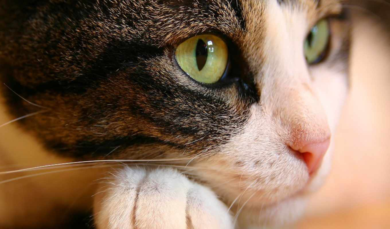 кот, you, любой, найти, можно, best, только,