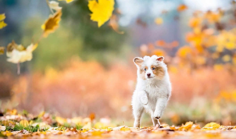 leaf, собака, осень, dot, pixel, пасть, jalan, день, фото, new