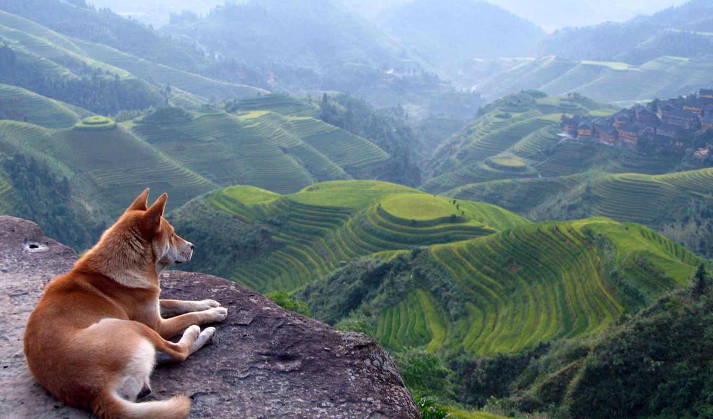 горы, собака, природа, дек,