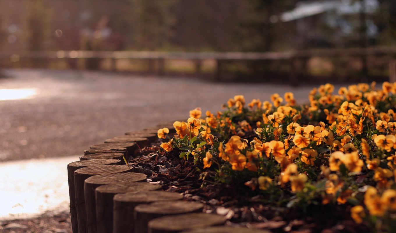 flowers, цветы, природа, июня, amazing,