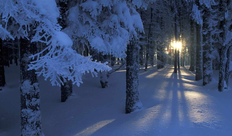 winter, лес, снег, sun, деревья, свет,