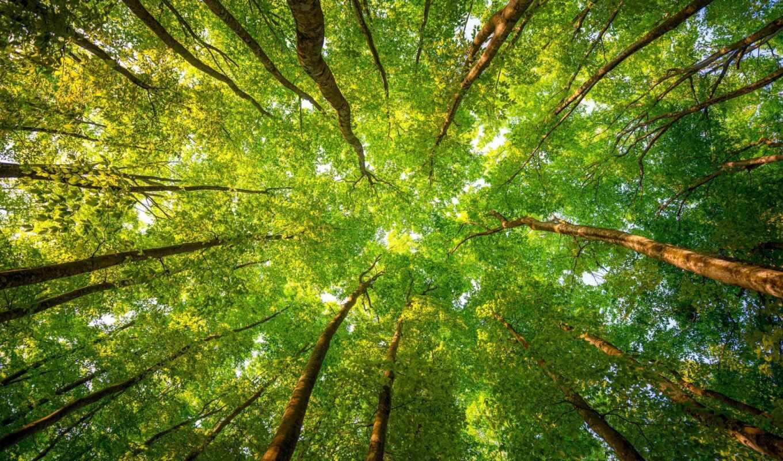 природа, дерево, crown, funart