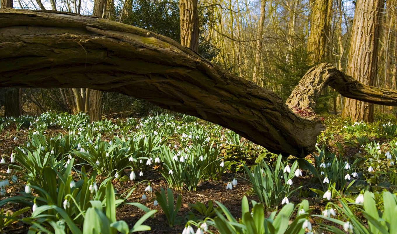 весна, марта, цветы, подснежники, красивые, природа,