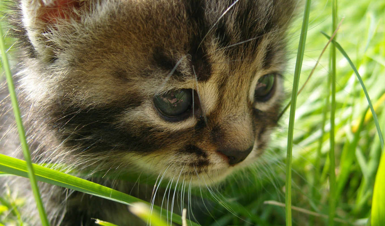 leto, priroda, трава, прогулка, котенок, прелесть,