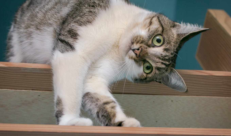 bonjour, кот, дек, playful, прикольный, spotted, zhivotnye, морда, взгляд,