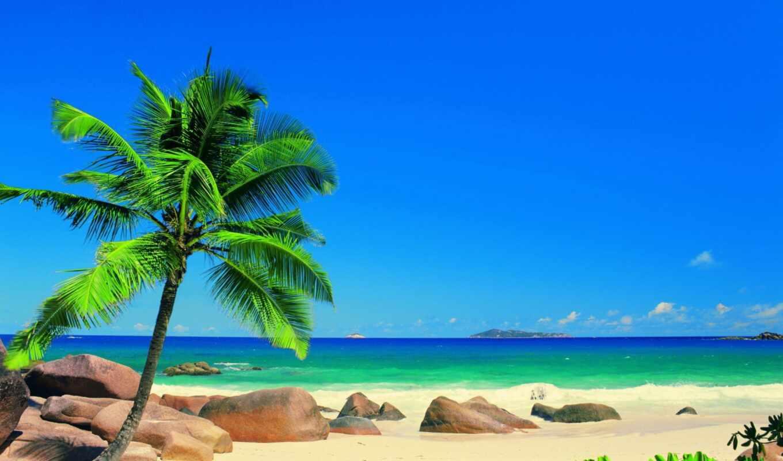 море, сниматься, природа, пляж, palm, баги, кадры, drawing, фотообои