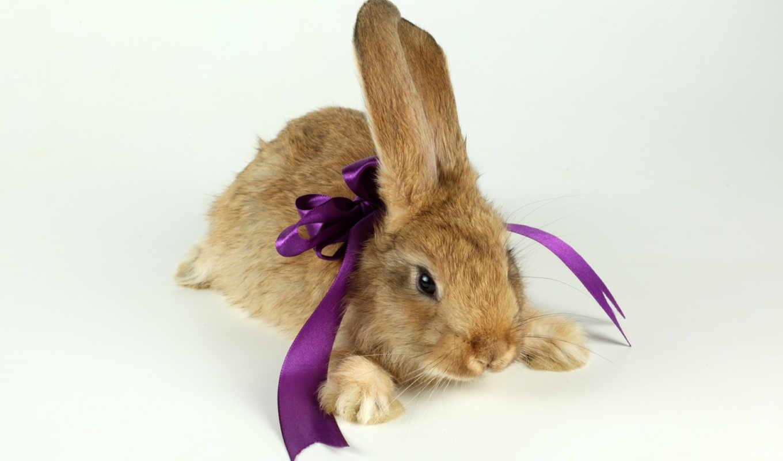 обои, кролик, год, новогодние, поднимут, quot, кро
