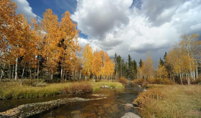 осень, природа, landscape, река, лес, preview,