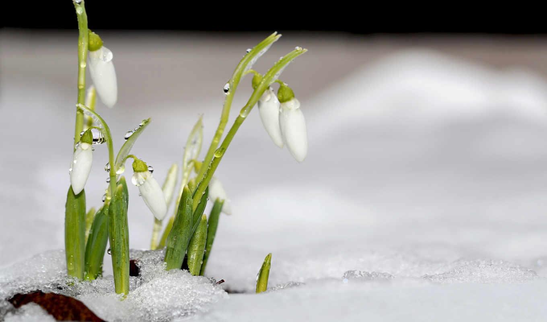 красивые, сайте, весна, нашем, янв, цветы, znajdziesz, windows, капли,