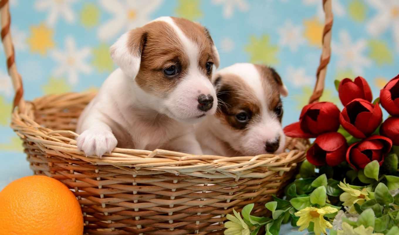 dogs, mix, коллекция, еда, цветы,