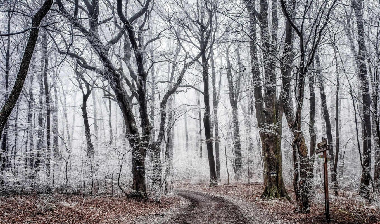осень, дорога, деревя, images, лес, иней, del, hintergrundbild,