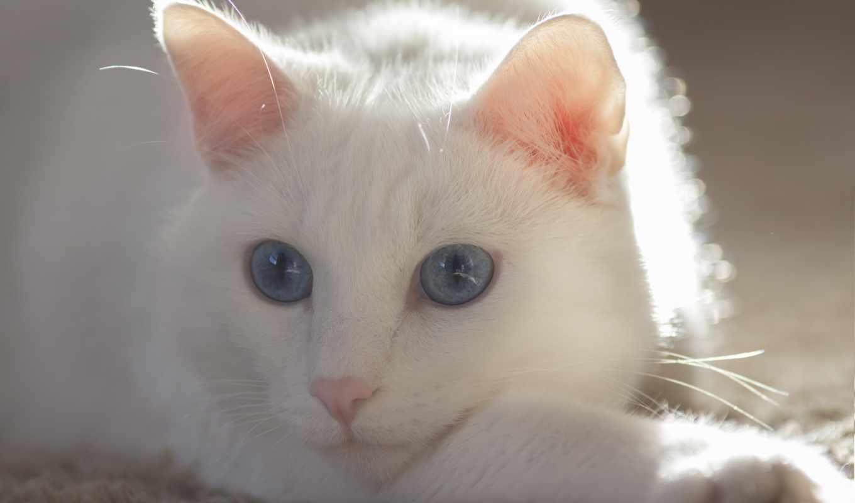 усы, кот, глаза,