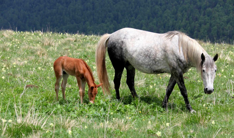 black, white, черная, лошадь, трава, лошади, табун,