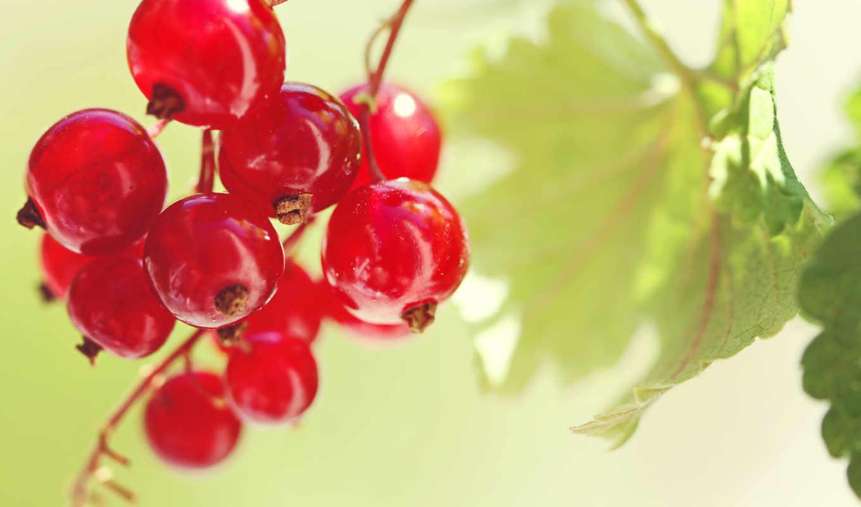 ягоды, фрукты, ягода, еда, красная,