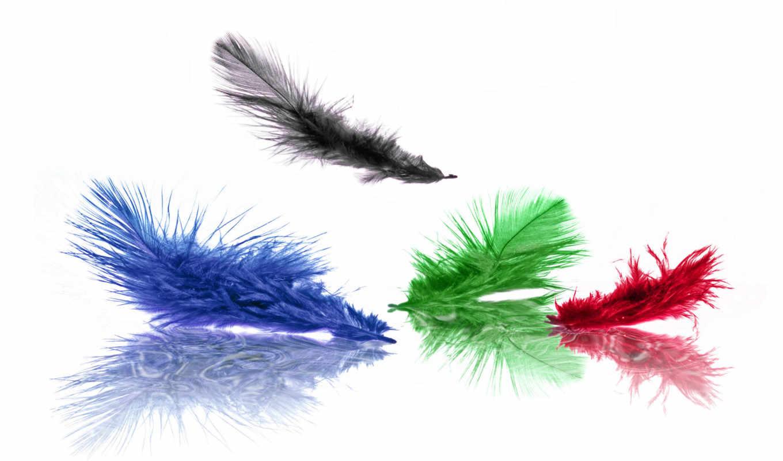 перья, зелёный, черный, цвет, синий, красный, разноцветные,