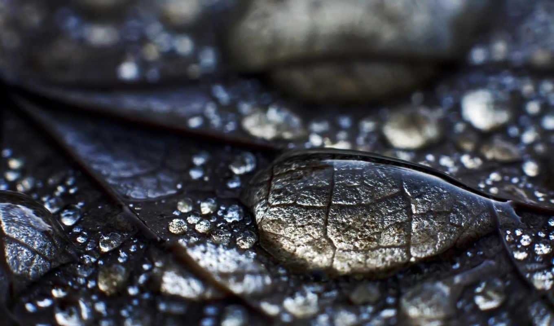капли, макро, листок, роса, вода, drop,