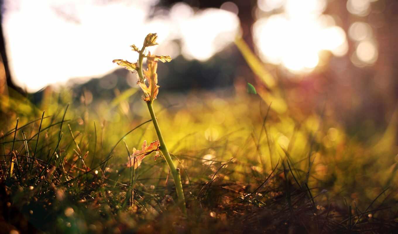 росток, трава, ваниль, экран, ipad, природа,