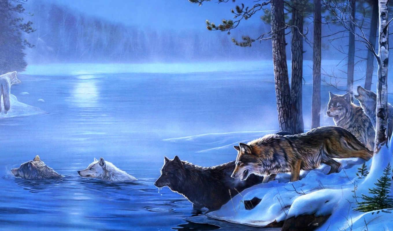волки, коллекция,