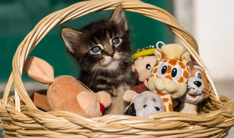 изображение, котенок, кошки, zhivotnye,
