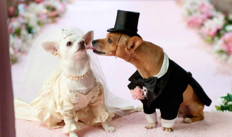 свадебный, animal, queen