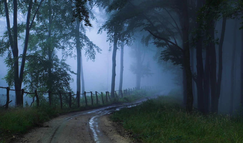 дорога, туман, лес, природа, пейзаж, картинка, неизвестность,