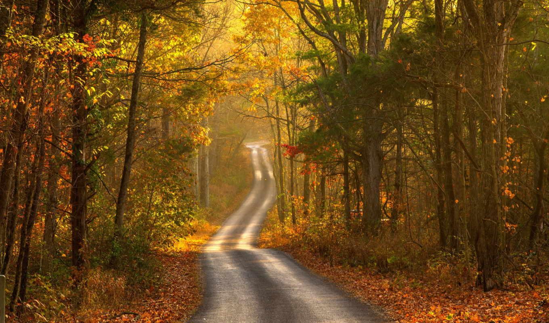 осень, пейзаж, дорога, картинку,