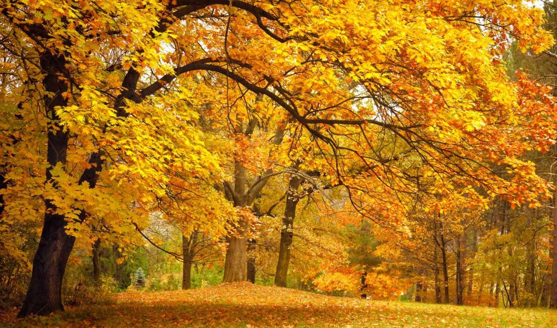 деревья, осень, лес, листья, парк, поляна, желтые, ветки, картинка, дуб,