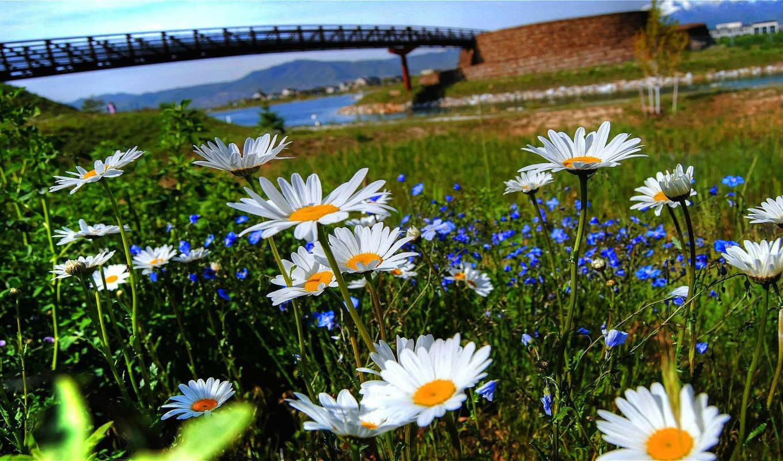цветы, watch, природа, queue,