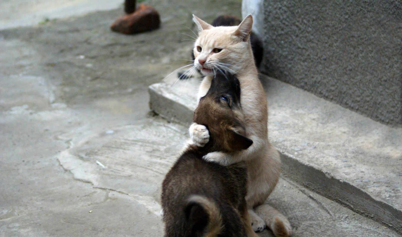 zhivotnye, животных, кошки, бездомным, очен,