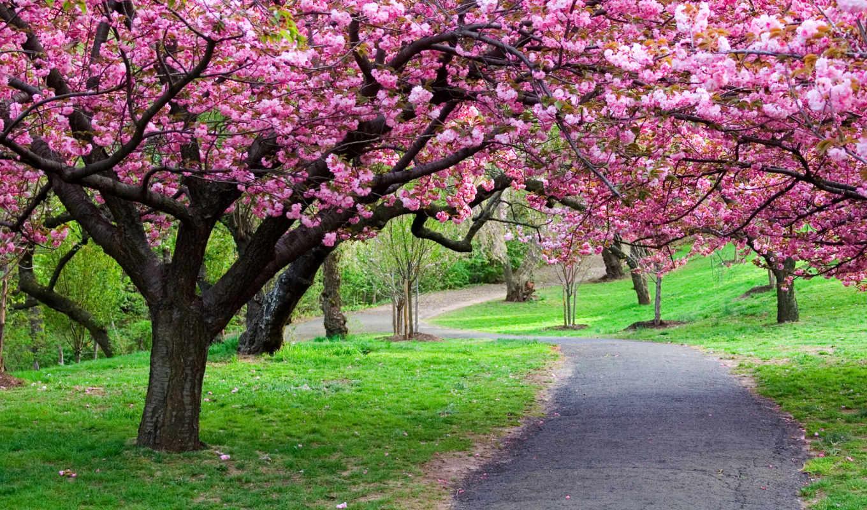 деревя, природа, лес, park, дорога, тропинка, путь,
