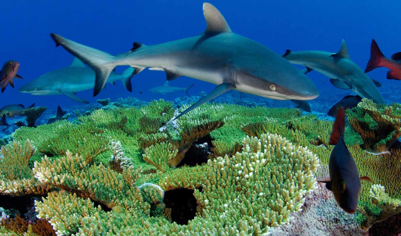 рыбы, море, животные, underwater, world, кораллы,