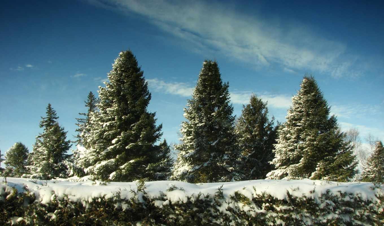 елки, снег, winter, деревья, есть, лес, небо,