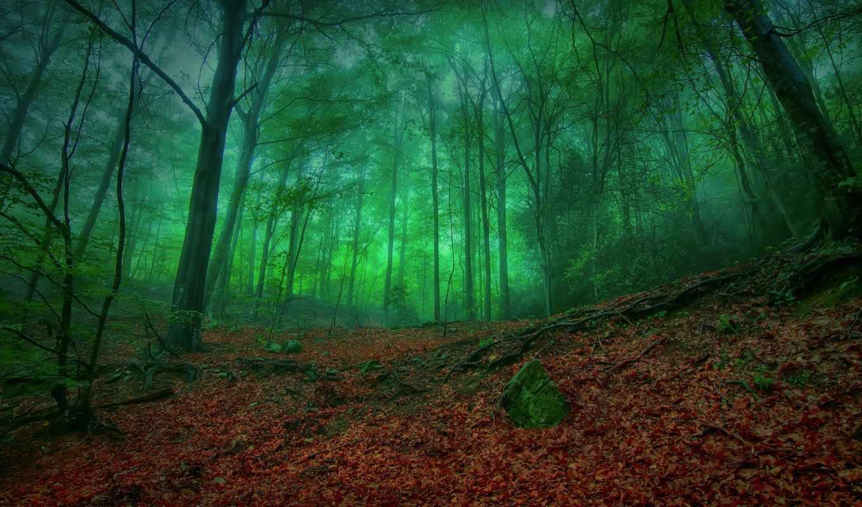 лес, зелёный, mystical, листва,