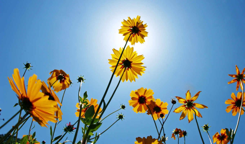 природа, flowers, красота, цветы, yellow, picsfab, sunshine, you, картинка, lawn, are, картинку, great, изображение, story, фабрика, картинок, description, with, sunlight, images, under, mente, sky,