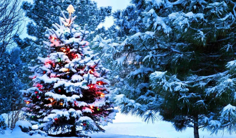 new, год, winter, christmas, дерево, только, украшения, снег,