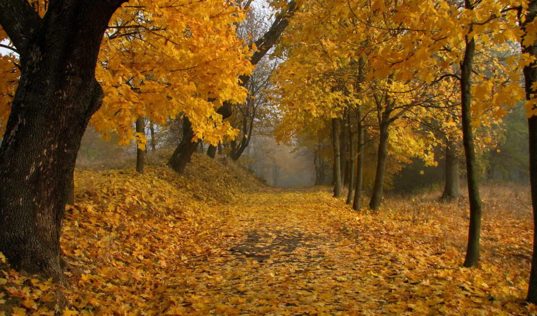 аллея, листья, осень, флот, деревья, осеннем, парке,
