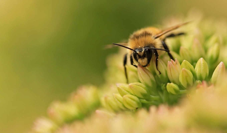животных, насекомые, пчелы,