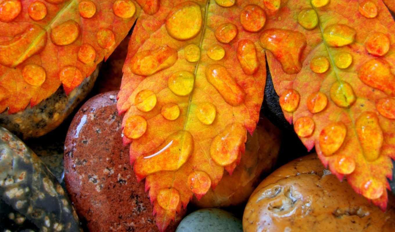 осень, природа, листья, макро, капли, росы,