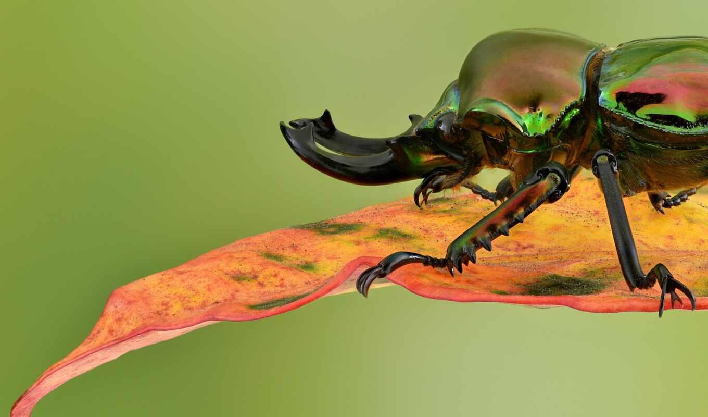 жук, makryi, drawing, digitalbild, funpot, schöne, насекомое