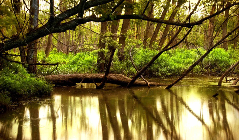 природа, река, вода, деревья, реки, красота, леса, картинка, forest, картинку,