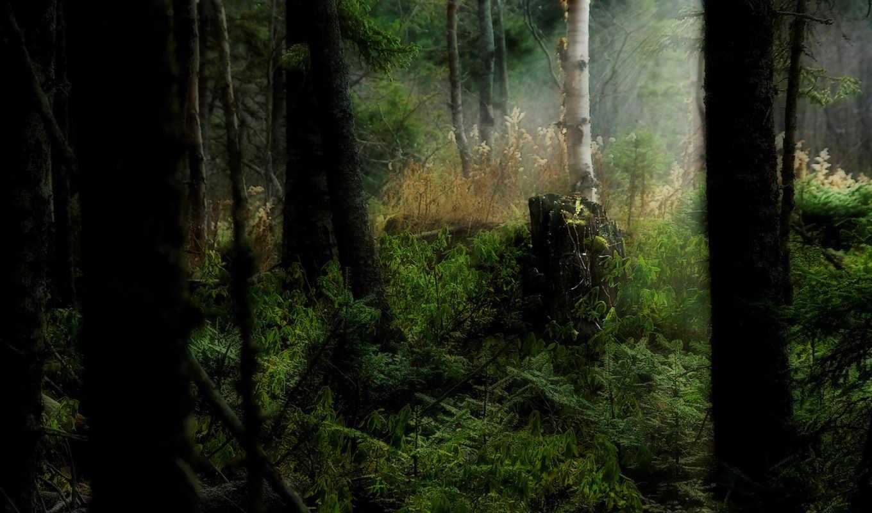 лес, dark, разрешениях, разных,