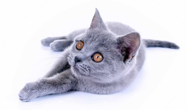 коты, zhivotnye,